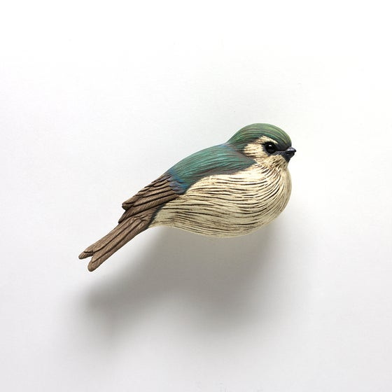 Image of Violet Green Swallow