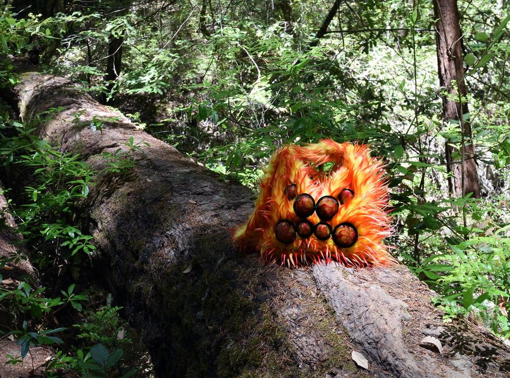 Image of Arachnid Orange Sorbet