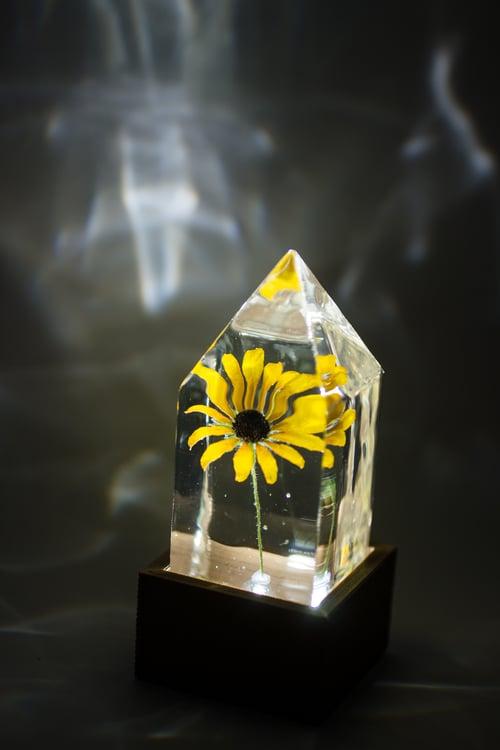 Image of Black-Eyed Susan (Rudbeckia hirta) - Floral Prism Nightlight #3