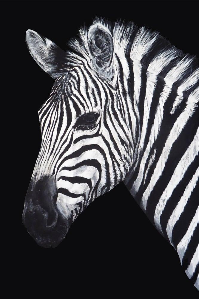 Image of Dave Zebra