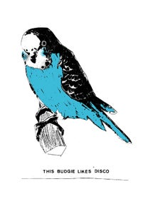 Image of This Budgie Likes Disco