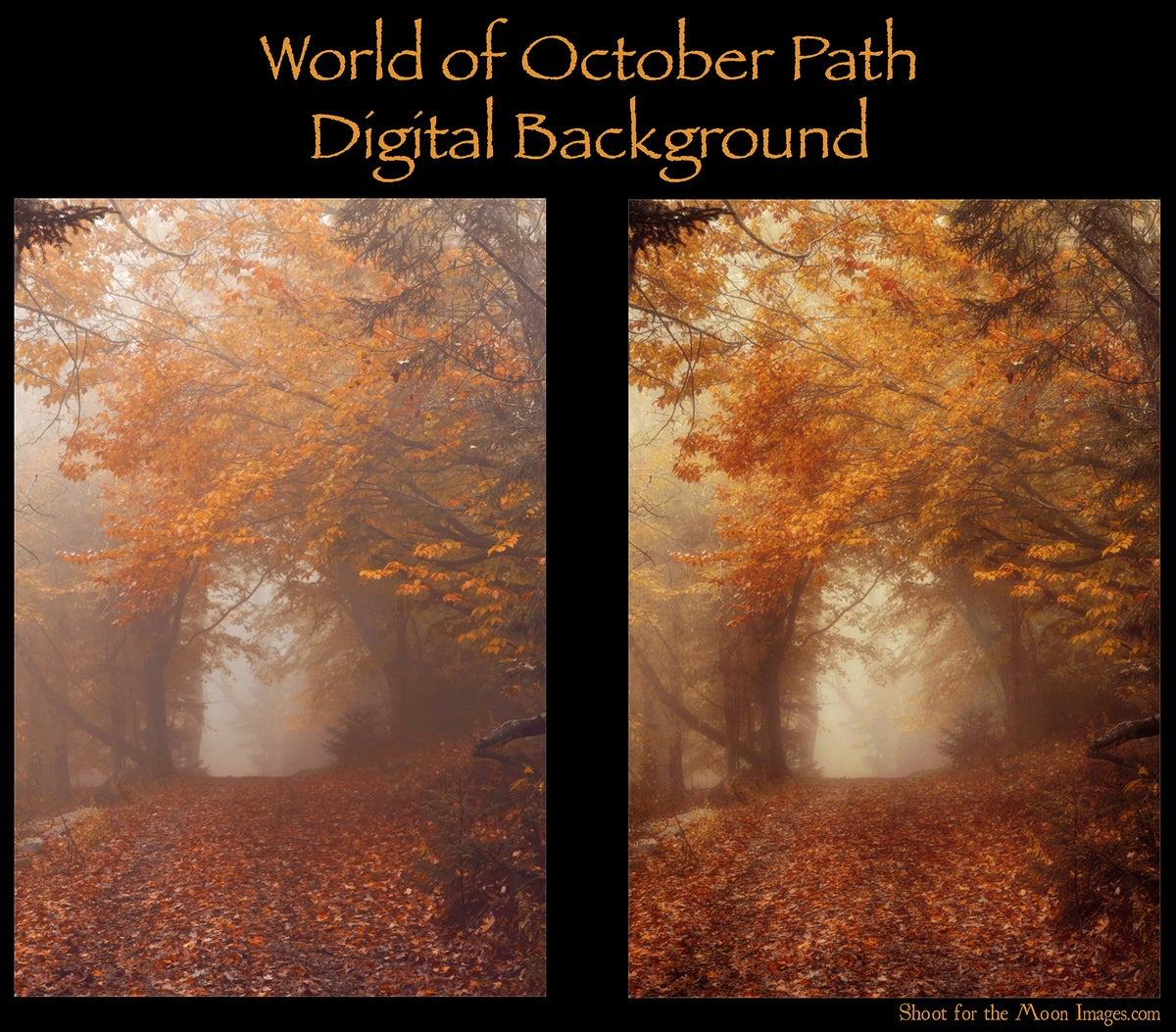 Image of World of October Path Digital Backgrounds