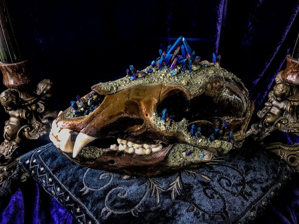 Image of Chalcopyrite & Blue Titanium Quartz - Bear Skull