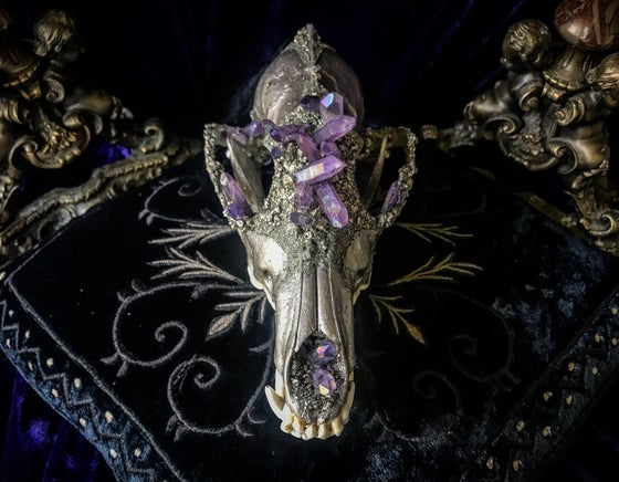 Image of Lavender Purple Titanium Aura Quartz - Grey Fox Skull