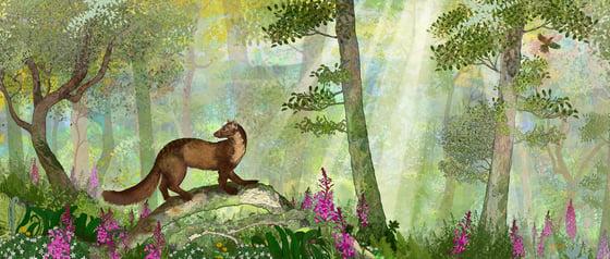 Image of Pine Marten's Glade