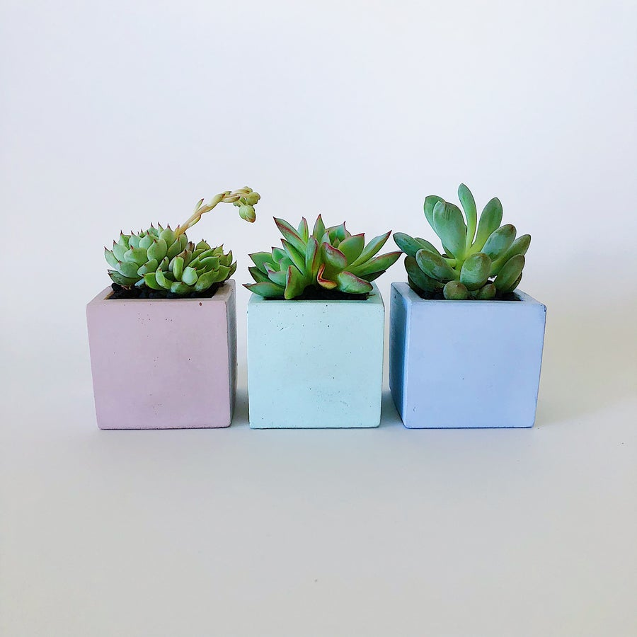 Image of Tiny Planter - Cube