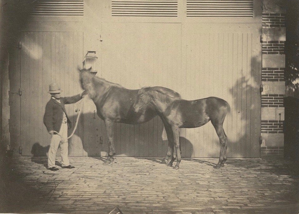 Image of Anonyme: albumen print of two horses 'Désiré' and 'Wild Girl' ca. 1860