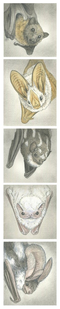 Image of RETIRED: Mini Bats Print Pack