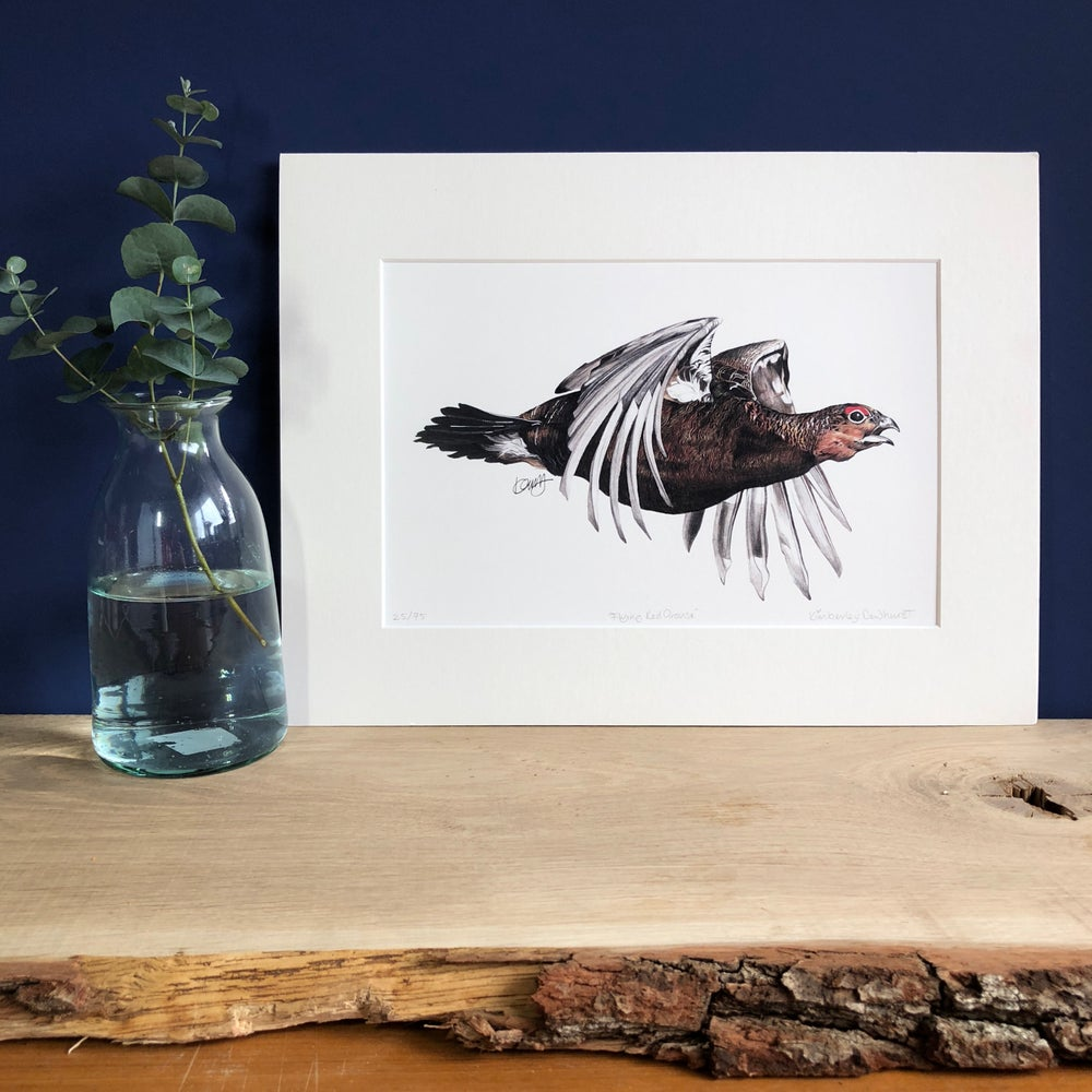 """Image of """"Flying Red Grouse"""" LIMITED EDITION PRINT"""