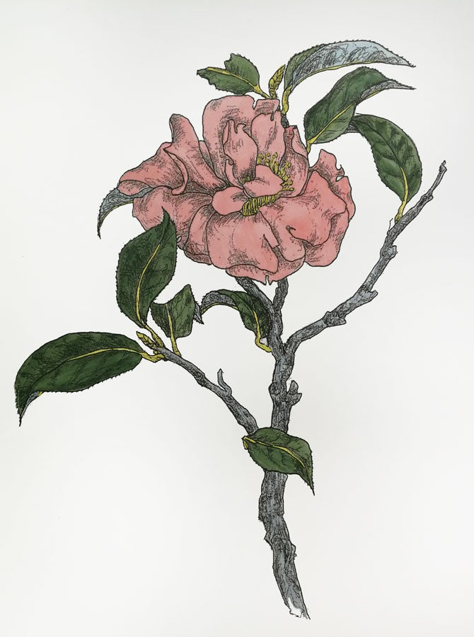 Image of Layla Walter Camellia Watercolours