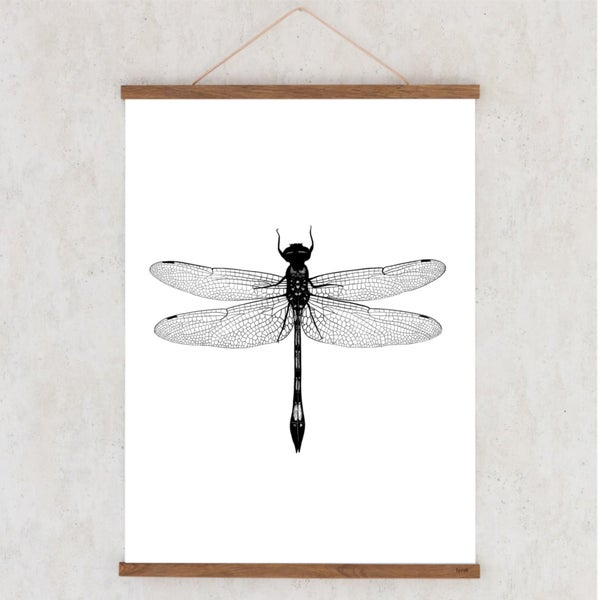 Image of Affiche A3 Libellule/ Dragonfly A3 poster