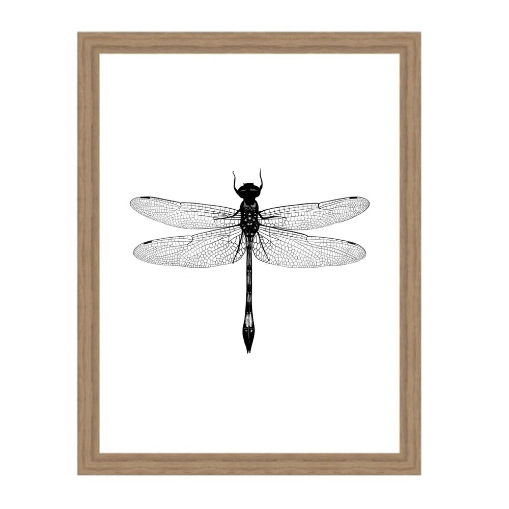 Image of Affiche A4 Libellule/ Dragonfly A4 poster