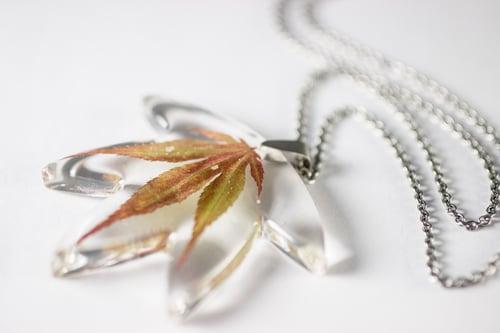 Image of Autumn Japanese Maple Leaf Small #1