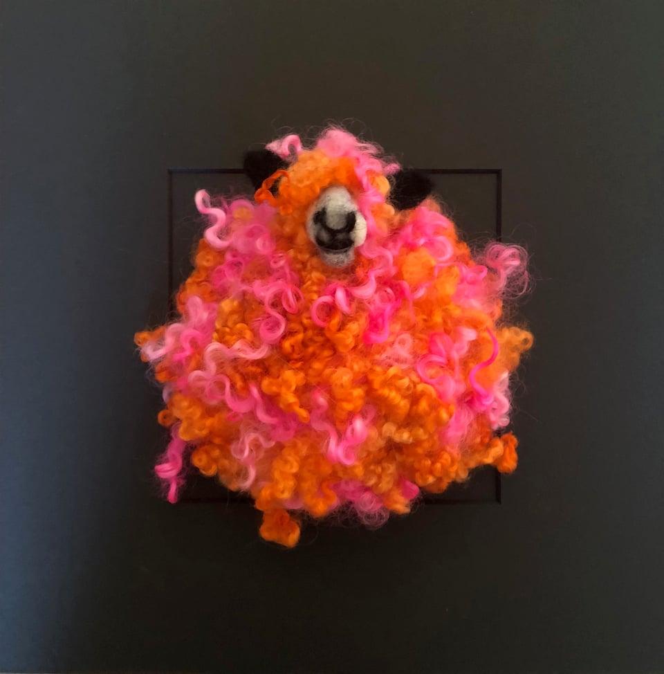Image of Multicoloured Wensleydale sheep