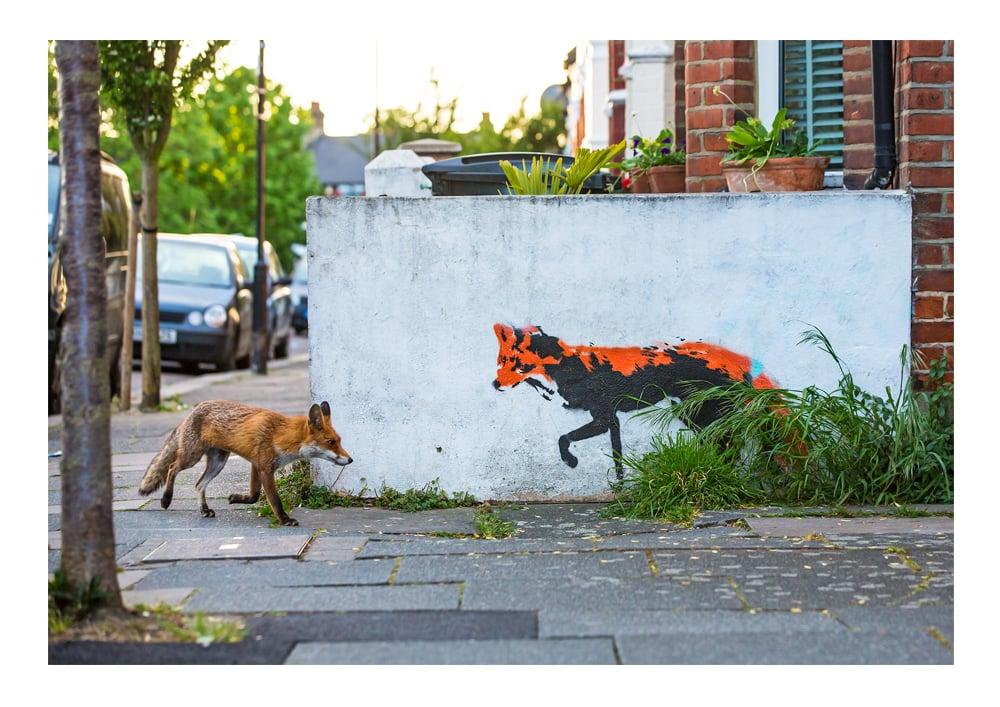 Image of Fox Meets Fox