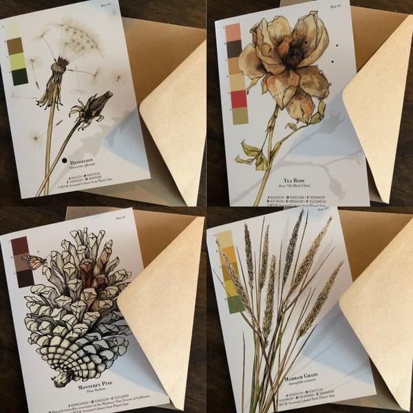 Image of Botanical greetings cards