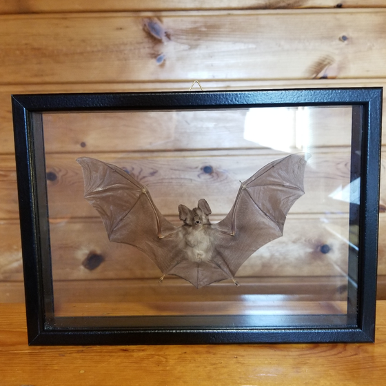 Image of Framed Bat