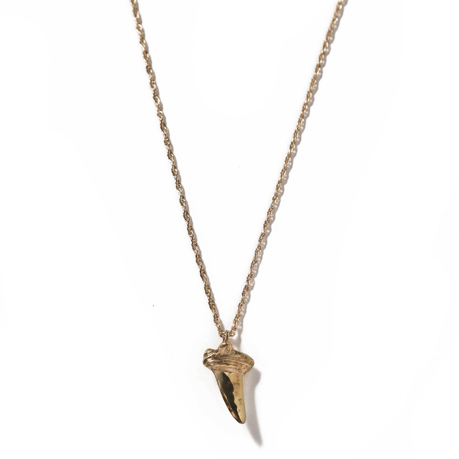 Image of Shark Tooth 2