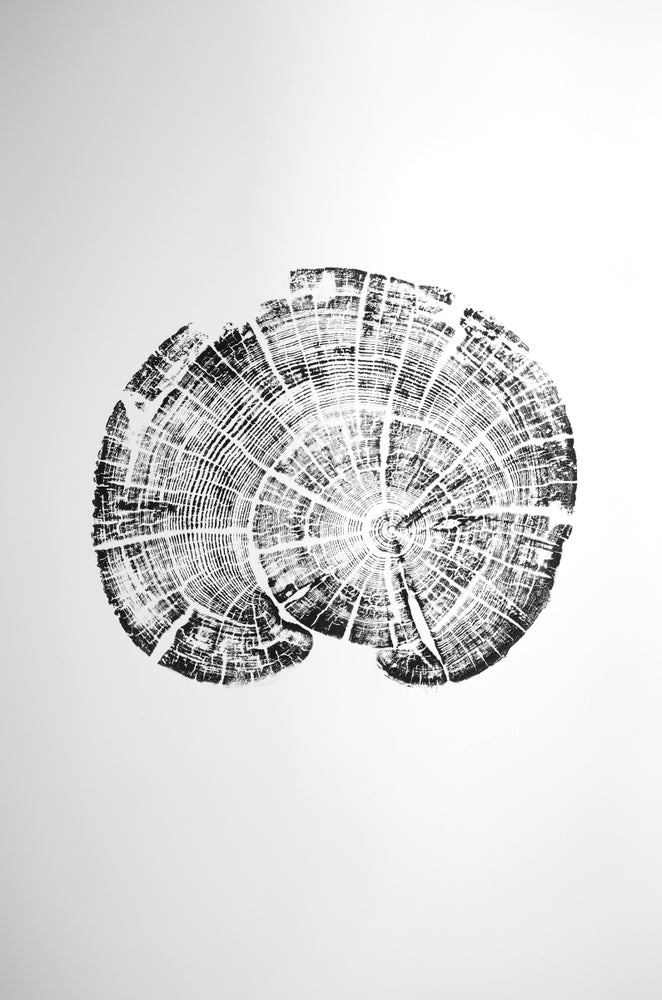 Image of abalone 22x30
