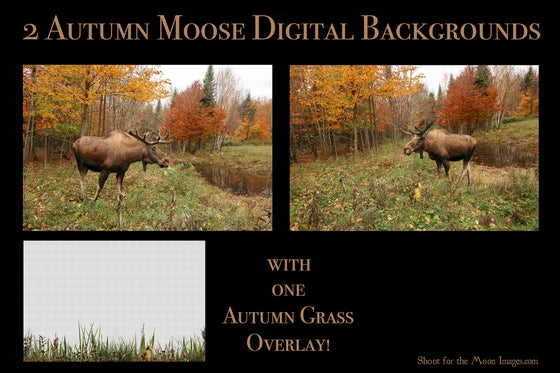 Image of Autumn Moose Digital Backgrounds