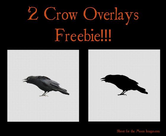 Image of Crow Overlays FREEBIE