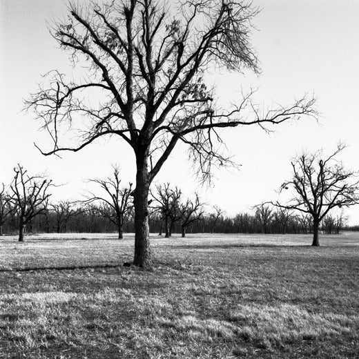 Image of Oklahoma Trees, Javine Hill, Skiatook, OK