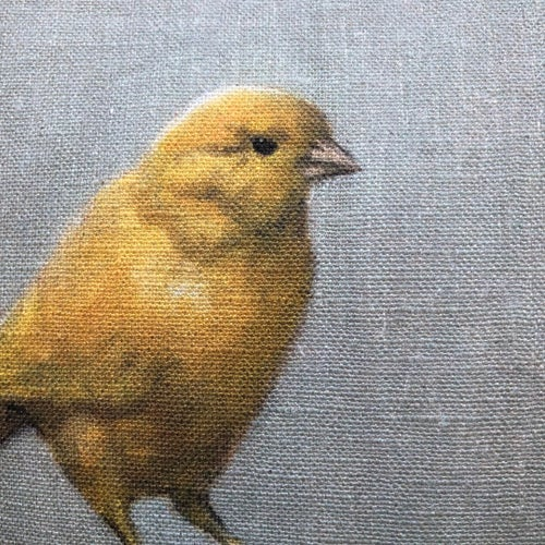Image of Yellow Canary