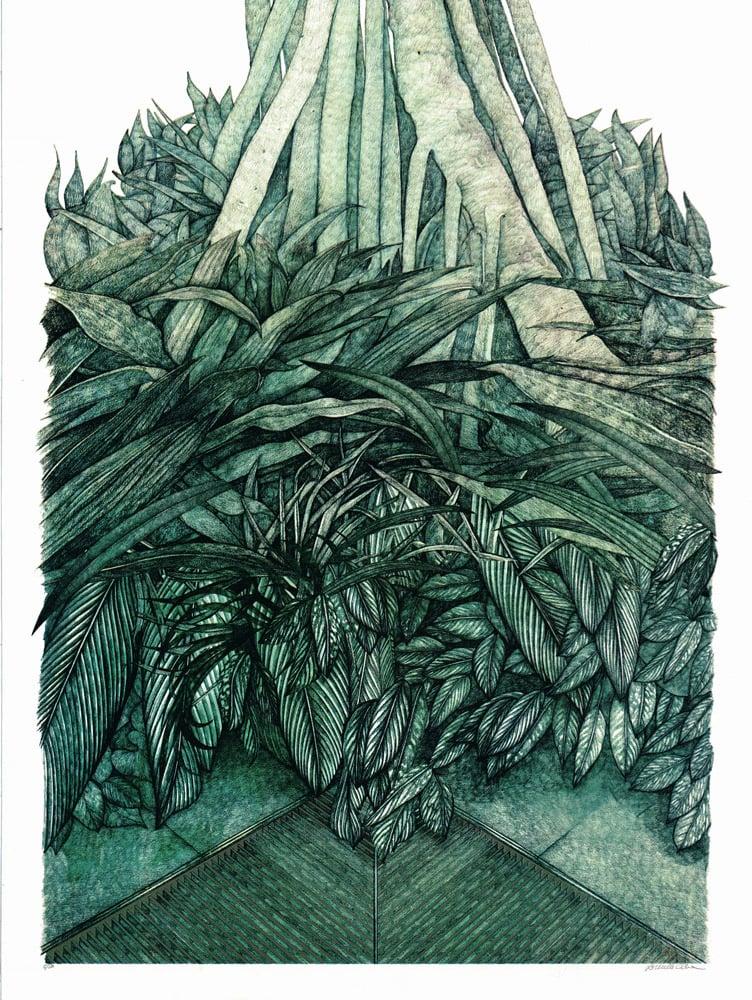 Image of Mangrove Mirage