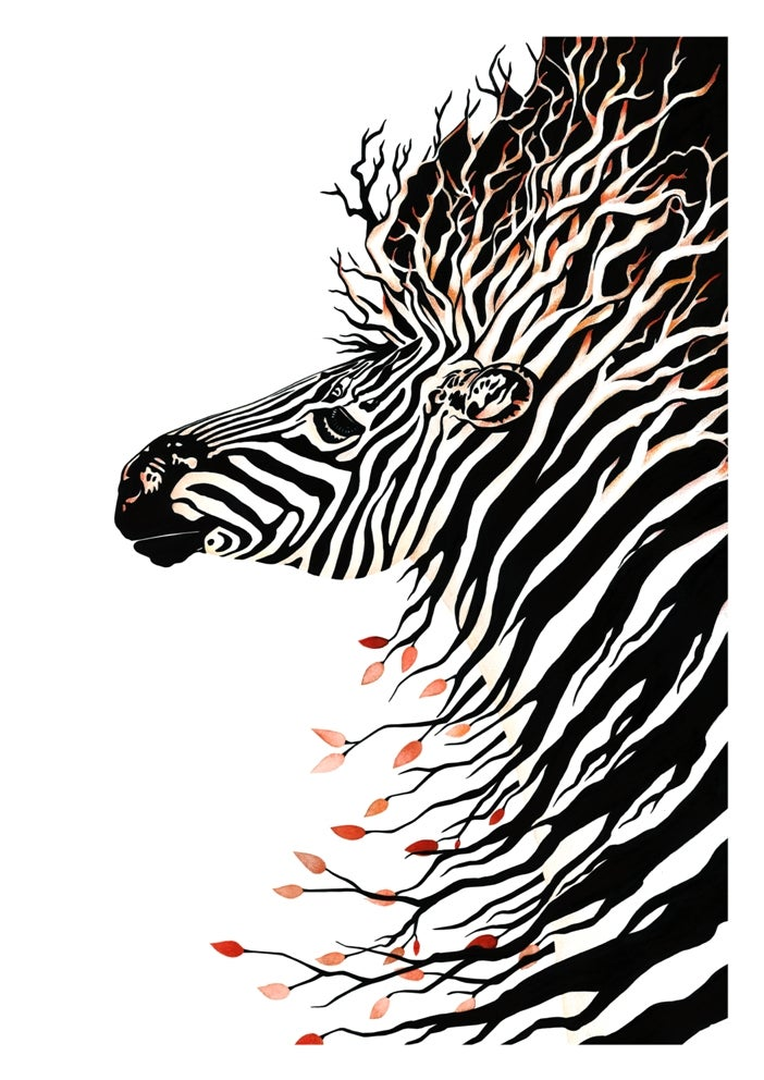Image of Zebra Warrior