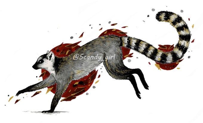 Image of Inktober day 28 Ring Tailed Lemur Print