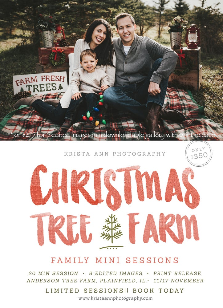 Christmas Tree Farm Mini Sessions.Christmas Tree Farm Mini Sessions