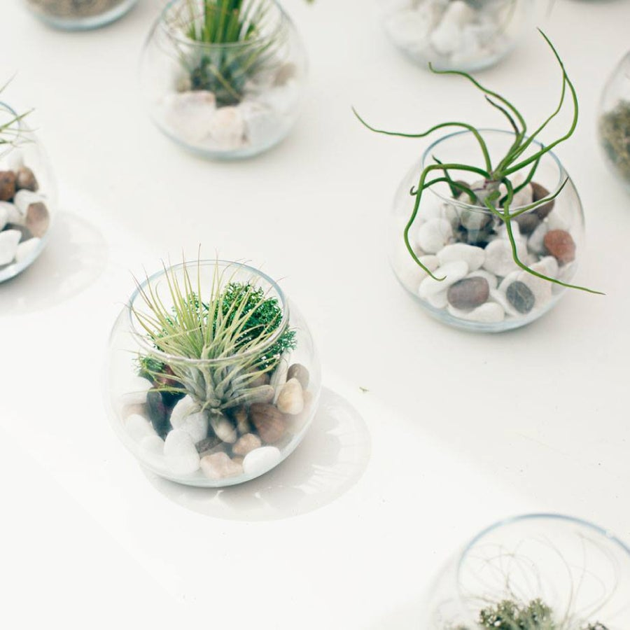 Image of FAMILY TERRARIUM (pack 4)