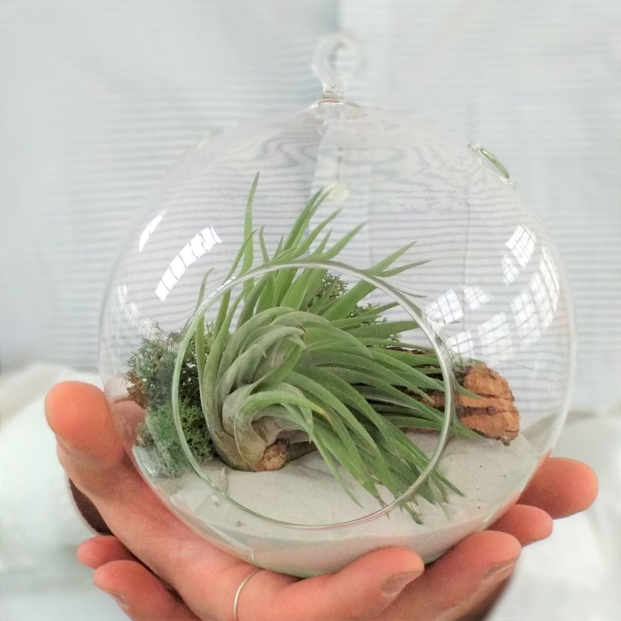 Image of multiflora terrarium