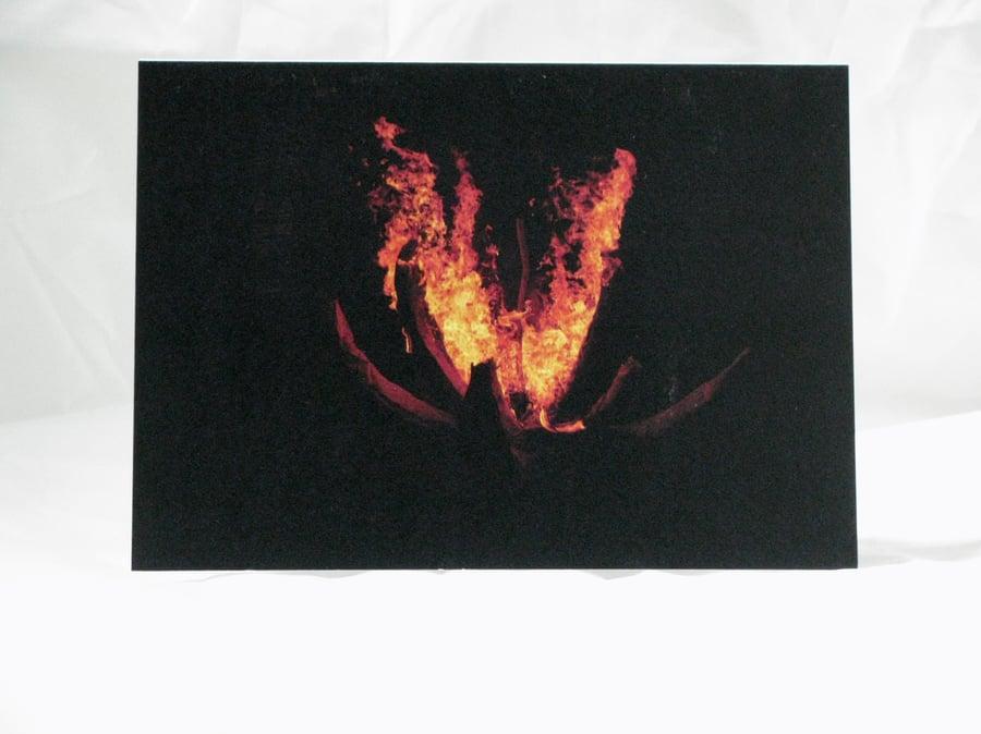 Image of Lotus Fire