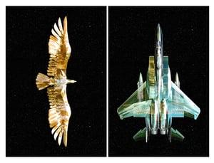 Image of The War Inside - Birds Of Prey