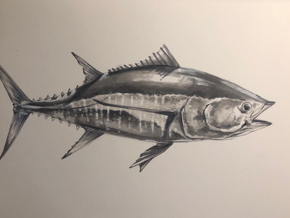 "Image of ""Yellow Fin tuna"""