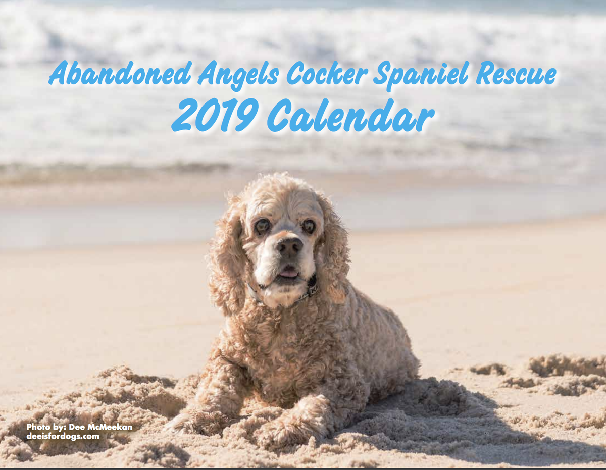 Image of 2019 Abandoned Angels Rescue Calendar
