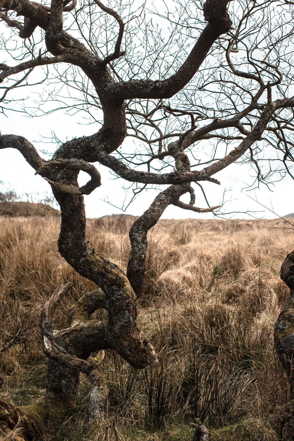 Image of Twisted tree #1