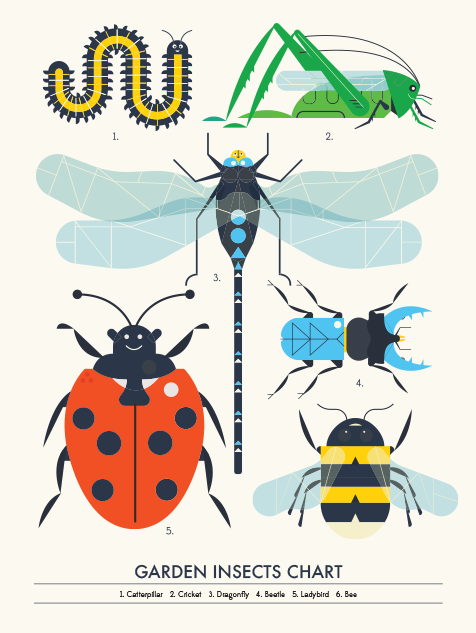 Image of Garden Insect Chart