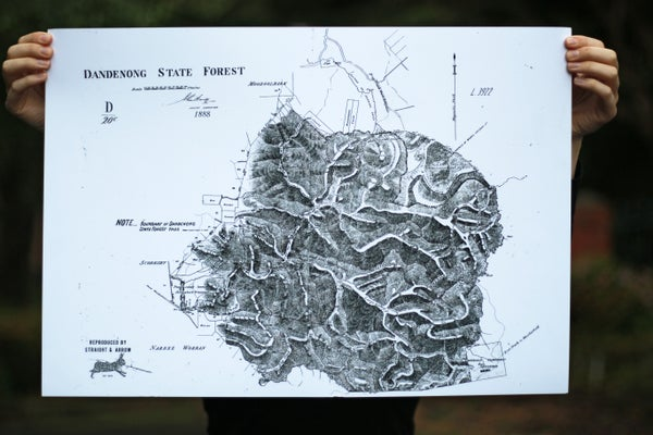 Image of Dandenong State Forest, 1888 (A2, black on white)