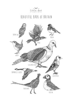 Image of Beautiful Birds of Britain