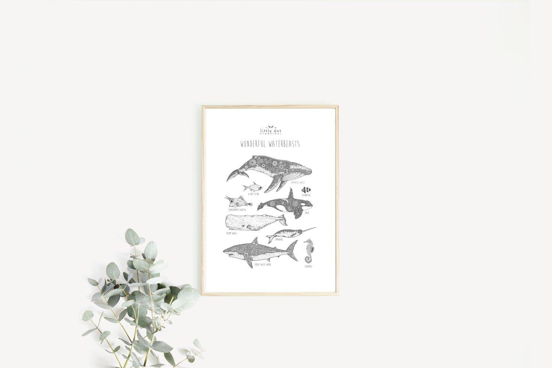 Image of Wonderful Waterbeasts