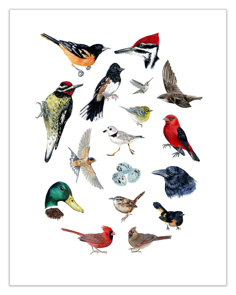 Image of COMMON BIRDS OF NORTH AMERICA: 11X14 INCH LIMITED EDITION PRINT