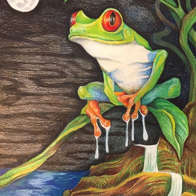 Image of Nocturnal Tree Frog