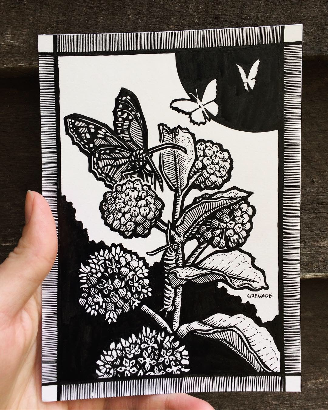Image of MILKWEED MONARCHS [original ink illustration]