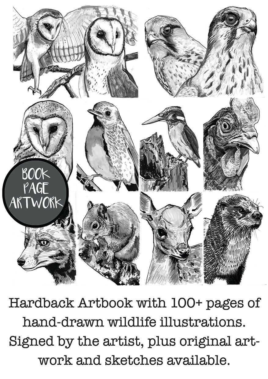 Image of An Illustrated Book About Birds (And Other Wildlife) Hardback