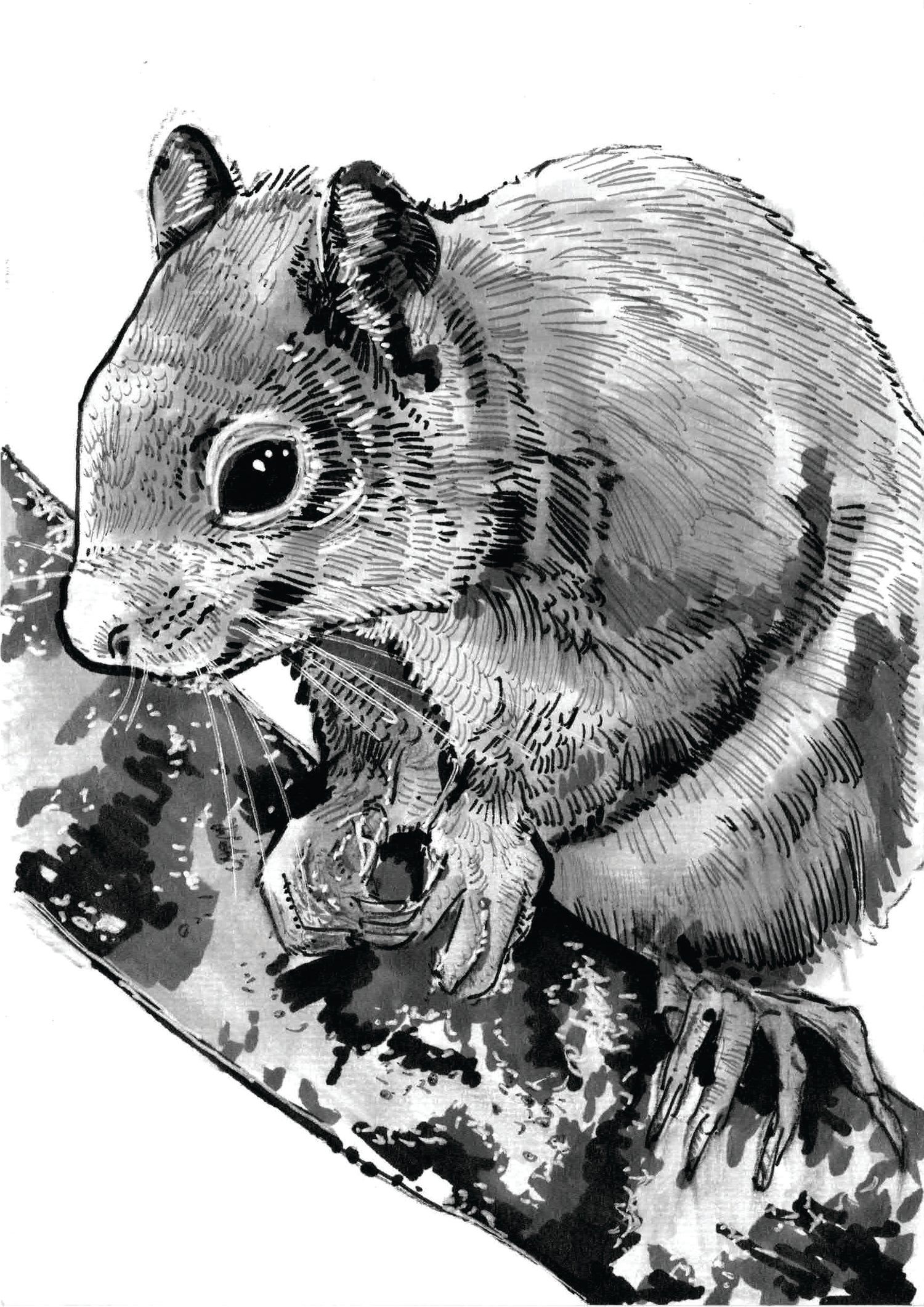Image of Squirrel Art Print Signed