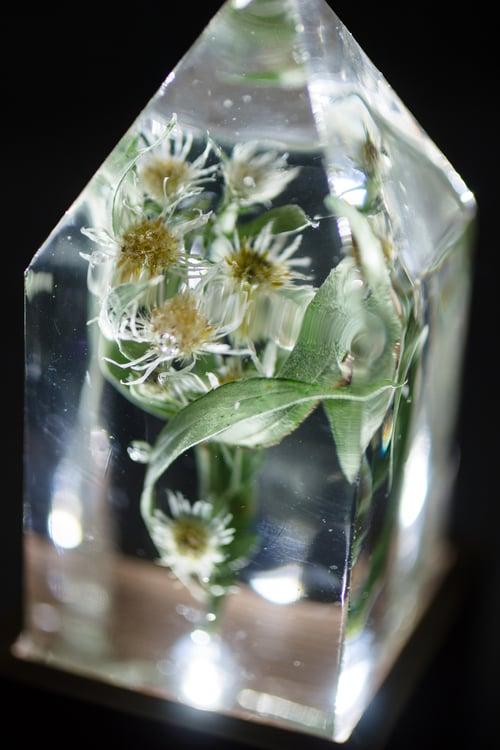 Image of Narrow Leaf Aster (Symphyotrichum lanceolatum) - Floral Prism Lamp