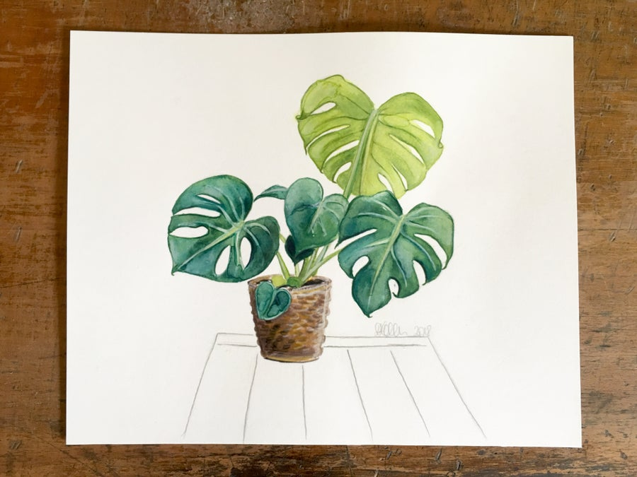 Image of The First Monstera