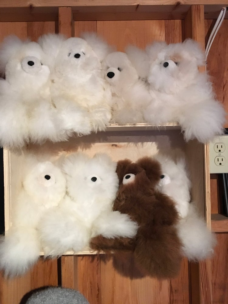 Image of Alpaca Teddy Bears